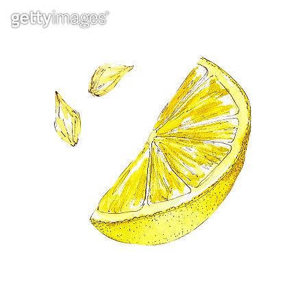 Watercolor citrus slice illustration