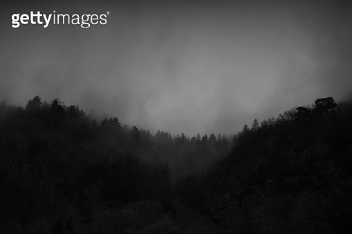 Misty forest of the North: tree on the mountain with fog