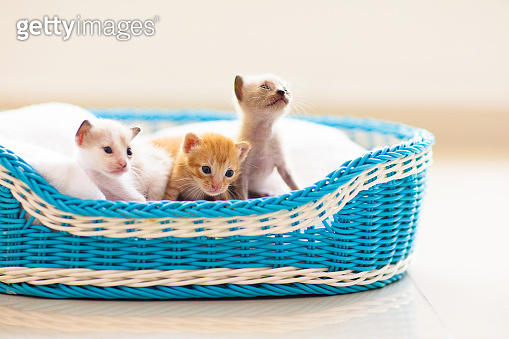 Kitten in a basket. Baby cat at home.