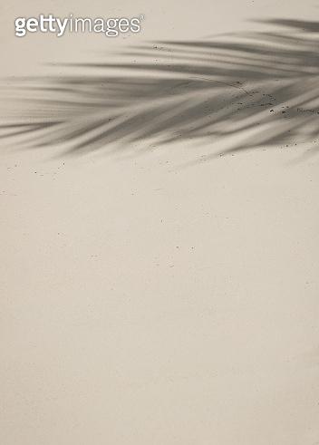Palm leaf shadow on the Beach