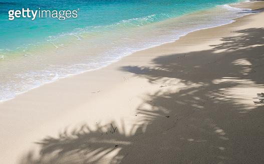 palm leaf shadow on sand