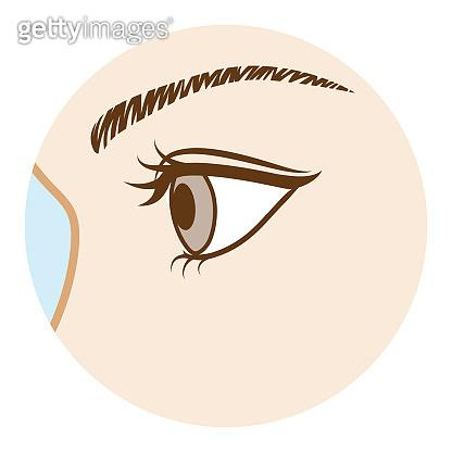 Eye -Body part, Side view