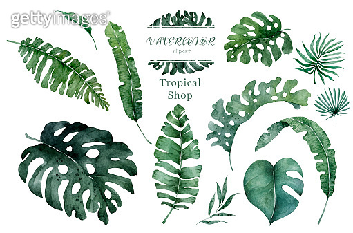 Collection of tropical leaves isolated on white background. Watercolor hand drawn jungle leaf isolated illustration.