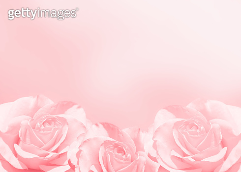 Banner with three pink roses