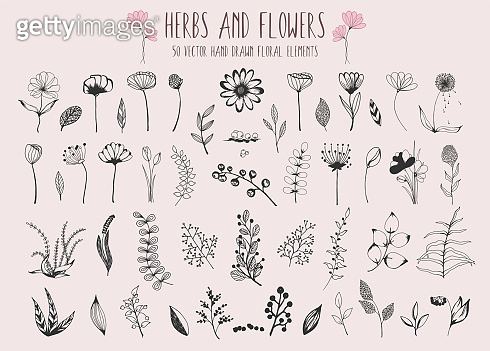 Beautiful big set of floral elements. 50 hand drawn doodle sketchy flowers, leaves, branches and berries. Vector for design cards, wedding invitations, poster, Birthday, Valentines Day greeting cards.