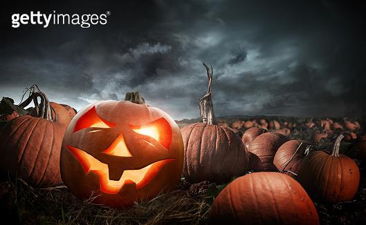 Spooky Halloween Pumpkin Field At Night