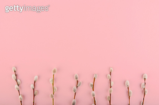Willow twigs on a pink background