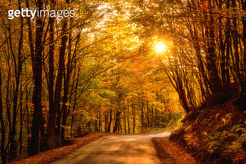 Narrow winding road in autumn bright forest