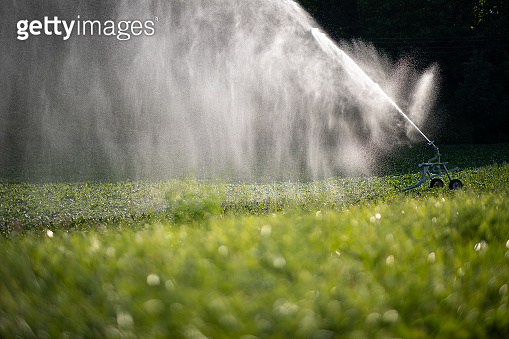 Intense agriculture corn fiekd being irrigatedwith huge amounts of water