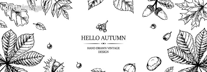 Hand drawn autumn horizontal banner with falling leaves, acorn and berries. Vector illustration in sketch style isolated on white. Space for text