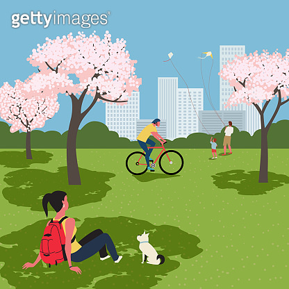 Blooming cherry city park recreation zone vector