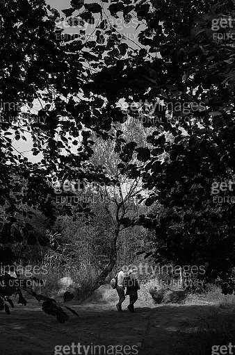Mature couple is walking in forest