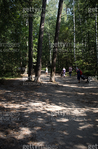 Family is walking on the forest footpath