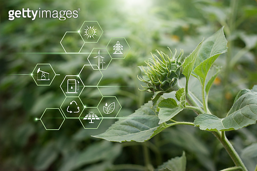 Abstract environment, Renewable energy, Green flower and energy resources icon on nature background.