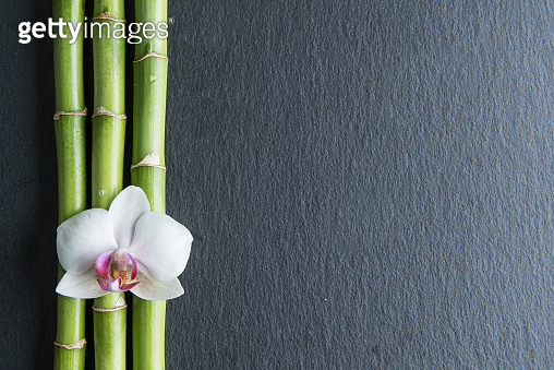 bamboo plant and tropical flower on the black