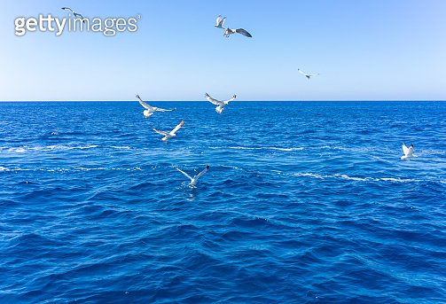 Scenic view of seagulls above aegean sea against blue sky.