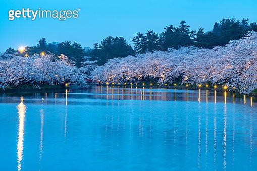 Hirosaki park cherry blossoms matsuri festival in springtime season
