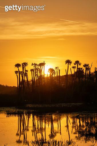 Breathtaking Orlando Wetlands Park During a Vibrant Sunrise in Central Florida USA