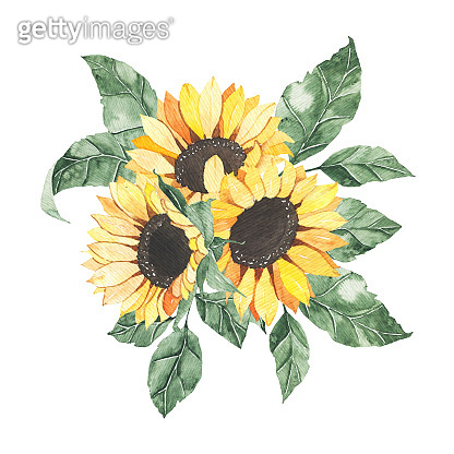Watercolor sunflowers bouquet with green leaves isolated