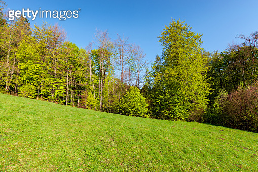 forest on the hill in spring