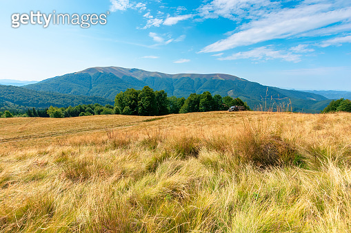 yellow grass on the meadow in mountains