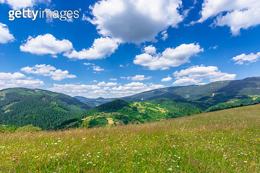 mountain meadow with wild herbs and green grass