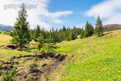 beautiful mountain landscape in springtime.