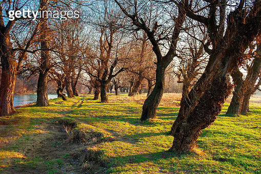 leafless trees in the park at sunrise