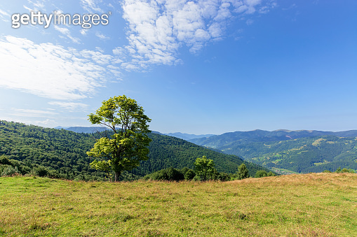 tree on the meadow in mountain scenery