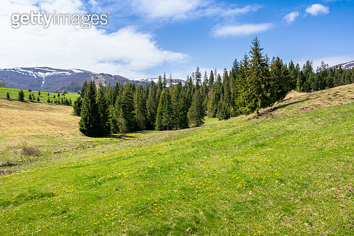 meadow and forest in mountains on a sunny day