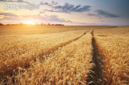 Road through wheat field.