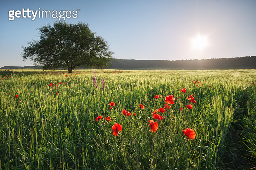 Spring meadow nature