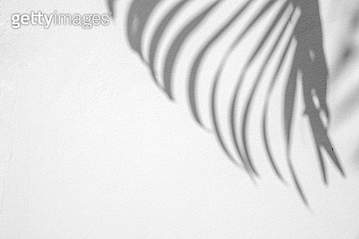 shadows palm leaf on a white wall.
