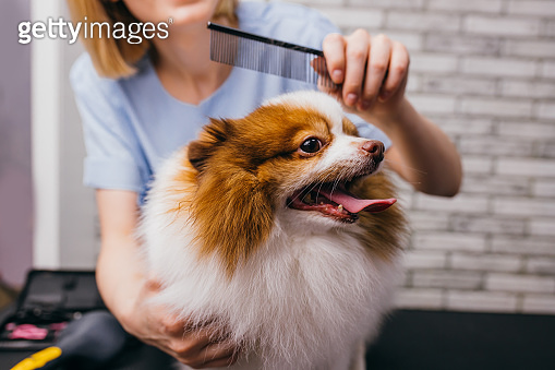 adorable little dog in grooming salon