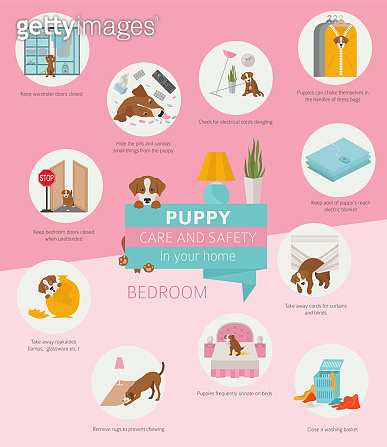 Puppy care and safety in your home. Bedroom. Pet dog training infographic design