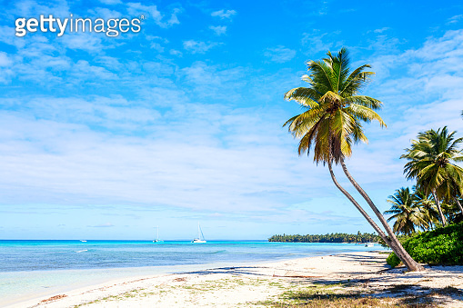 Palm trees on the caribbean tropical beach. Saona Island, Dominican Republic. Vacation travel background