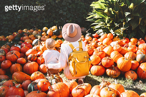 Back view on mother and little kid at pumpkin patch outdoors. Woman and child picking pumpkins at farm market.