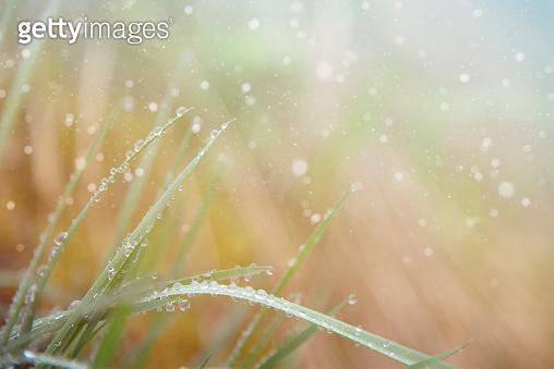 Rain Drops on Fresh Grass