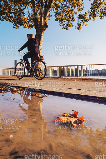Cologne, Germany - September 2018: Fall season leaf and Tourist riding a bicycle in the early morning in Cologne, Germany. Focus on the leaf