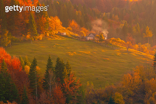 Autumn foliage trees in the mountains. Meadow with house and forest in the Carpathian mountains