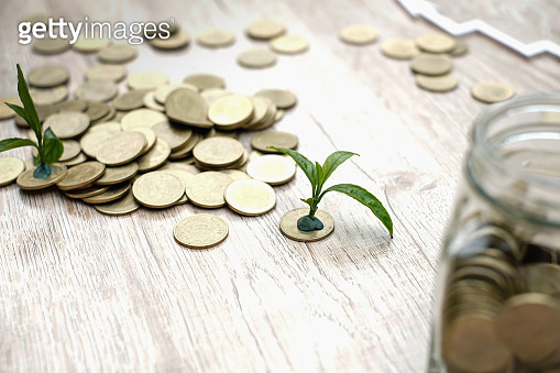 Hands of  giving coins to trees growing on coins. plant growing on top for business green natural. investment financial concept. Business growth.