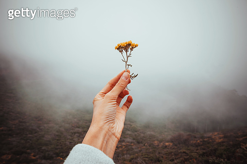 beautiful woman's hand holds a torn flower on a background of cloudy gray cloudy background on nature