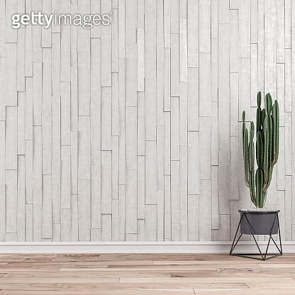 Empty wall background with cactus right