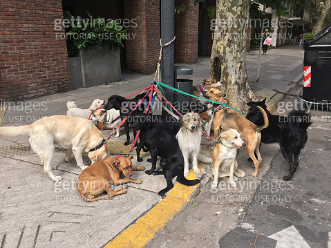 Dogs on leashes tied to pole