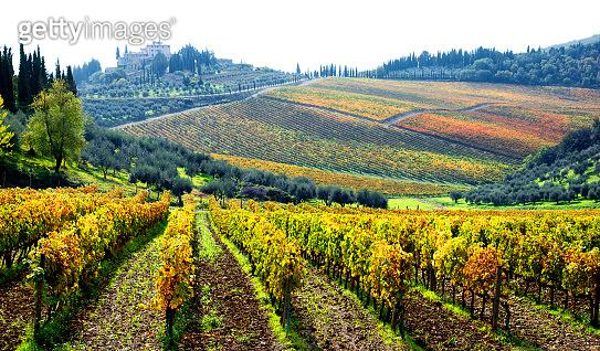 Vineyards in autumn, Chianti region, Tuscany, Italy