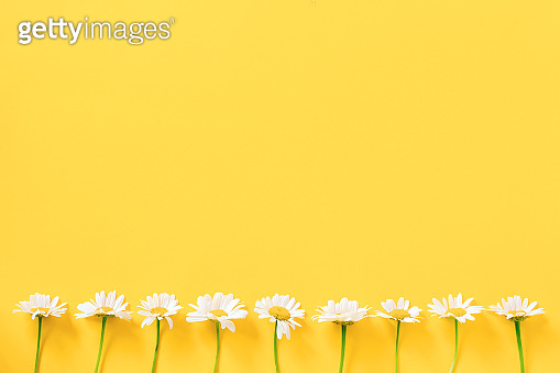 Border made with white chamomile flowers on yellow background. Concept Hello spring or summer Template for design, greeting card, invitation, postcard Flat Lay Top view Copy space
