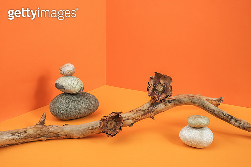 Creative natural layout made of from a tree branch, dried flowers and stones on orange background. Trendy Front view composition