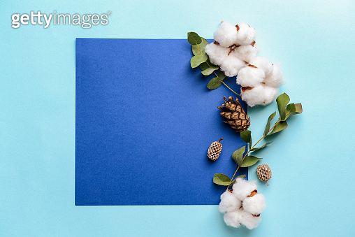 Cotton flowers with sheet of paper on color background
