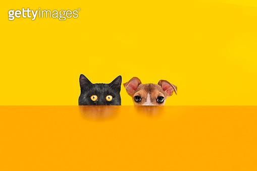 Cat and dog behind the orange color desk.