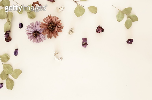 Flowers background. Composition from dried flowers and eucalyptus leaves pattern frame on white backdrop.Top view, flat lay. Copy space. Minimal floral card